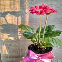 Skromny kwiatuszek