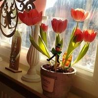 Tulipany Marleny ....