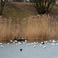 W parku ptaki czekają na wiosnę