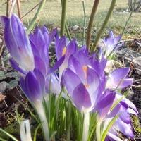 Wiosna , nareszcie wiosna !