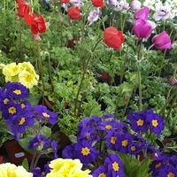 Wiosna wiosna wiosna !!!
