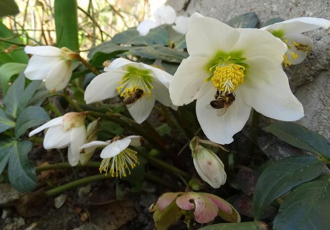 Pszczółki mają zajęcie :)