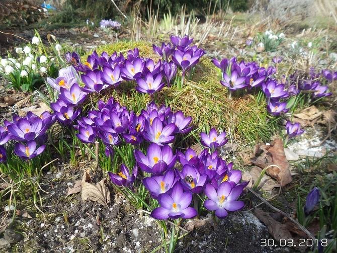 Wiosna ............