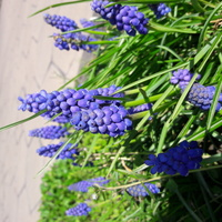 Kolory wiosny codziennie zachwycają :)