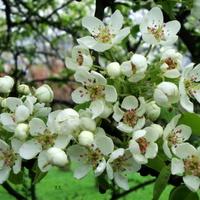 Kwiaty na drzewie w parku.