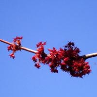 Kwitnąca gałązka.