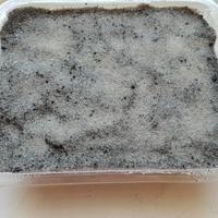 Nasiona lithopsów zasiane