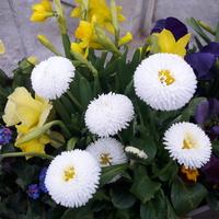 Piękna wiosenna biel