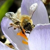 Pszczółki, motylki i...