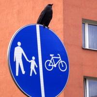 Ptaki w mieście