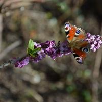 Są już kolorowe motyle