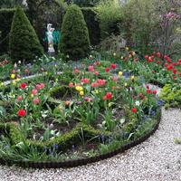 Tegoroczna zima nie sprzyjała tulipanom ...