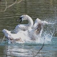 Wiosenny taniec na wodzie