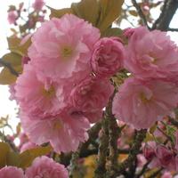 wiosna,....
