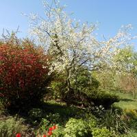 Wiosny czar :)