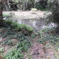 Arboretum w Kòrniku
