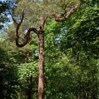 Ciekawe drzewo w parku na Mazowszu.