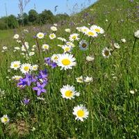 Łąki skąpane w kwiatach