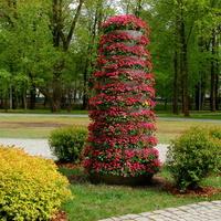 Kwiaty i inne rośliny w parku na Mazowszu.