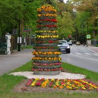 Kwiaty w pewnym miasteczku na Mazowszu.
