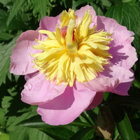 Matkuję też kwiatkom :))