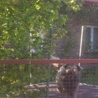 Psi ogrodnik pozował mi