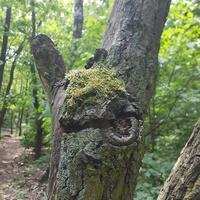 W lesie też byłam..