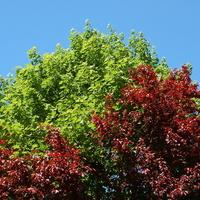Wiosna w dwóch kolorach + błękit