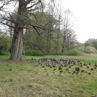 Wizytówka Kórnickiego arboretum