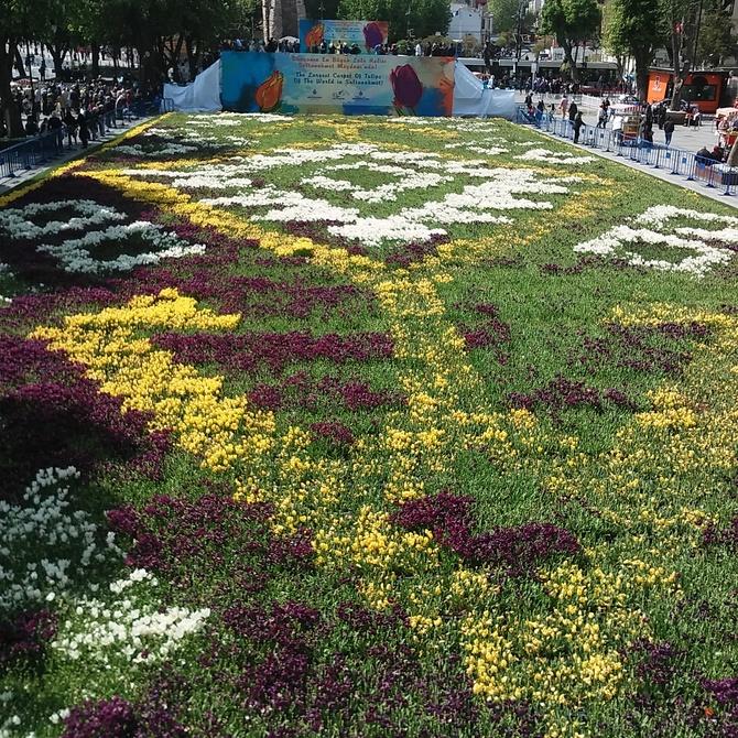 Festiwal tulipanów