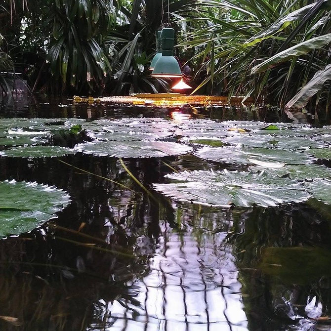 Poznań - ogród botaniczny