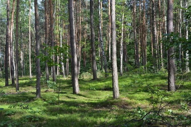 W lesie jest cisza i spokój.