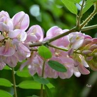 Kwiaty na nieznanym drzewie