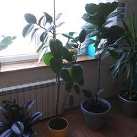 Moje największe rośliny