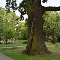 Pomnik przyrody w parku na Mazowszu