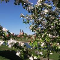 Poznań - widok na katedrę
