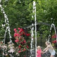 Wysokie róże w parku w innym ujęciu.