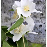 Zapachniało kwiatami....