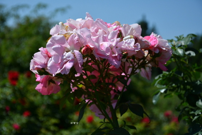 Pachnące kwiaty