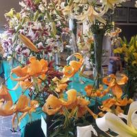 Byłam na wystawie lilii i kompozycji kwiatowych;-)