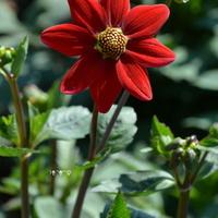 Kwiatek jak wiatraczek