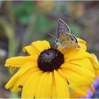 Maleńki motylek...
