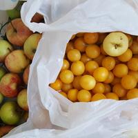 mirabelki i jabłka z dzikiego sadu nad wodą