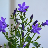 Niebieski kwiatek