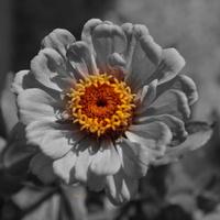 Smutny kwiatek