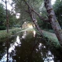 Wieczorna wycieczka do lasu