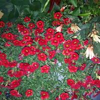 Wróciłam ale kwiaty jeszcze z Gdańska