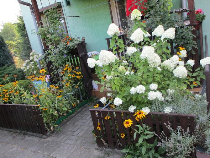 Kwiaty przy tarasie