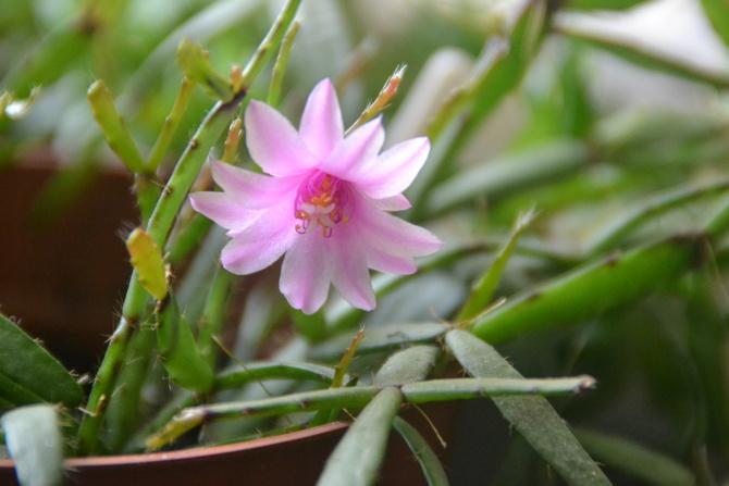 Pierwszy i ostatni kwiatek