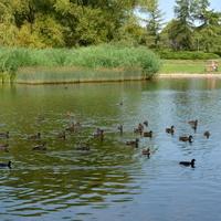 Flora i fauna w parku w czasie upału